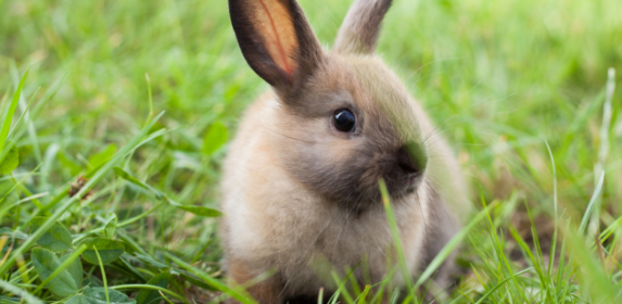 Bunny-rabbit-animals-pets-canva photo-can reuse