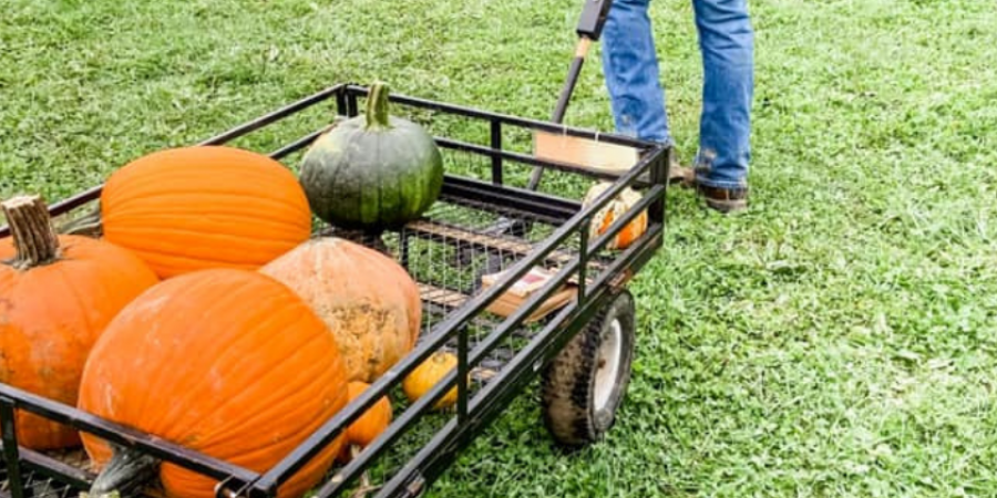 Pumpkin patch-fall