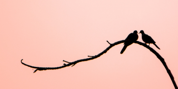 birds-nature-outdoors-romance-love-affection-canva photo-can reuse-couple