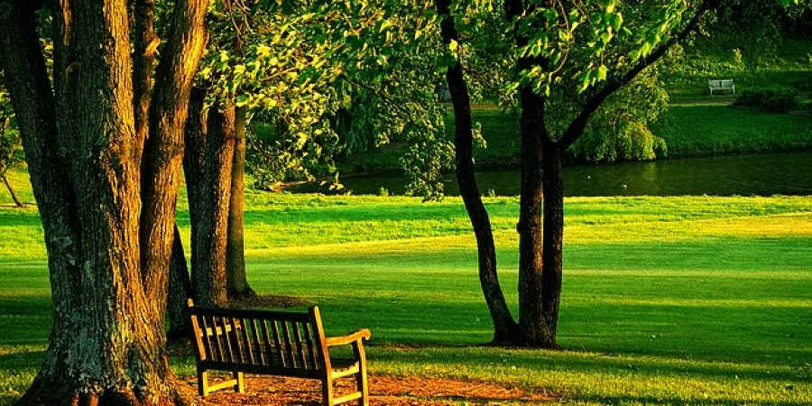 meadowlark-437252_640-park-outside-bench-relax-nature-spring-summer